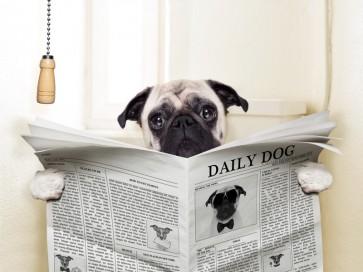 Pitou - Newspaper Bathroom V