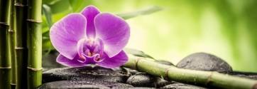 Omar Olavi - Pink Orchid