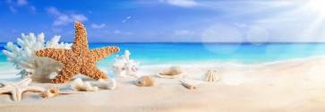 Vladimir Lug - Sea Shells on Beach II