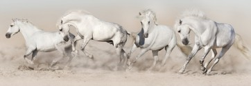Jocelyn Borivoj - Horse - White Herd Run In Desert