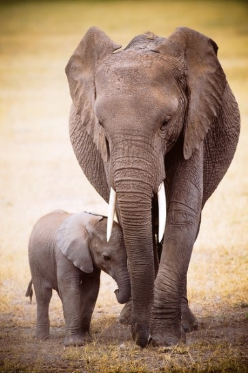 Elephant with her baby