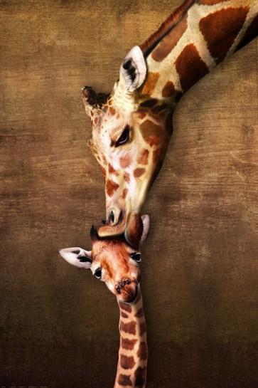 Girafe and her baby