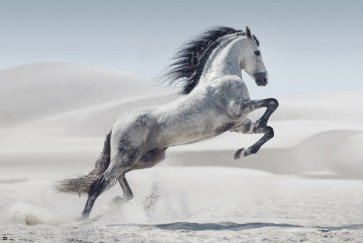 Jumping Horse on the beach