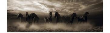 Horses - Wild Stampede