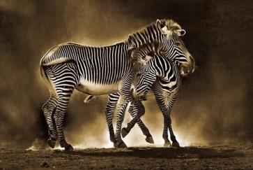 Zebra Mom Love
