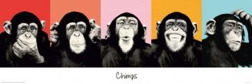 Monkey Chimps Poster