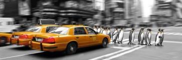 NY-Yellow taxi - Penguins