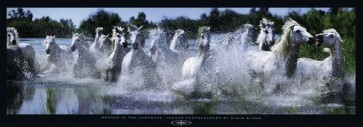 Bloom - Camargue Horses