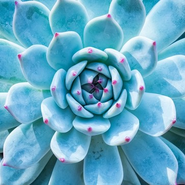 Plante Succulente I