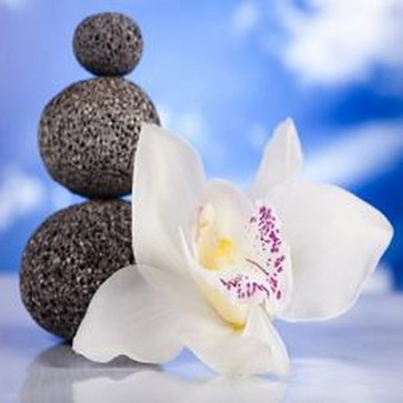 Still Life With White Orchid Flower