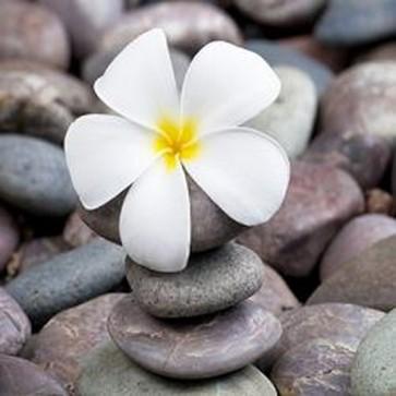 Frangipani On a Stack of Rocks