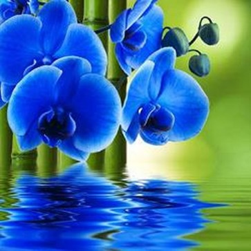 Blue Orchid Flower With Bamboo