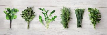 Herbs - Kitchen