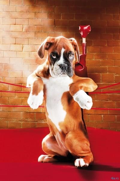 Картинка поздравления боксера