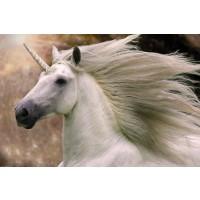 Bob Langrish - Unicorn