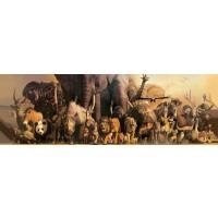 Africa - Animals