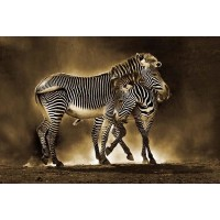 Zebra Mom Love
