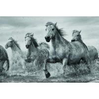 Horses - Camargue