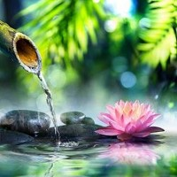 Zen Garden With Pink Lotus