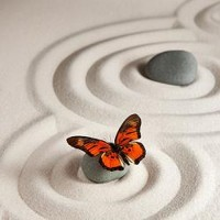 Zen Rocks With Butterfly