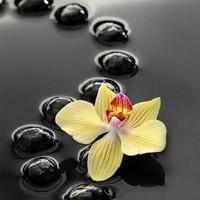Black Zen Stones And Yellow Orchid
