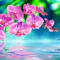 Orchid in Zen Garden