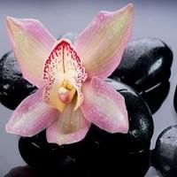 Zen Stones and Orchid Flower