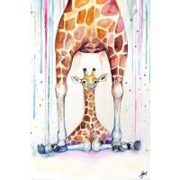 Marc Allante - Gorgeous Giraffes