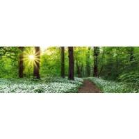 Forest - Spring