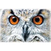 Owl - Close